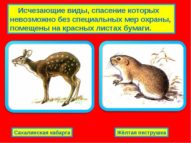 Исчезающие виды, спасение которых невозможно без специальных мер охраны, пом...