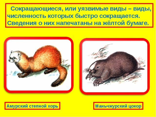 Сокращающиеся, или уязвимые виды – виды, численность которых быстро сокращае...