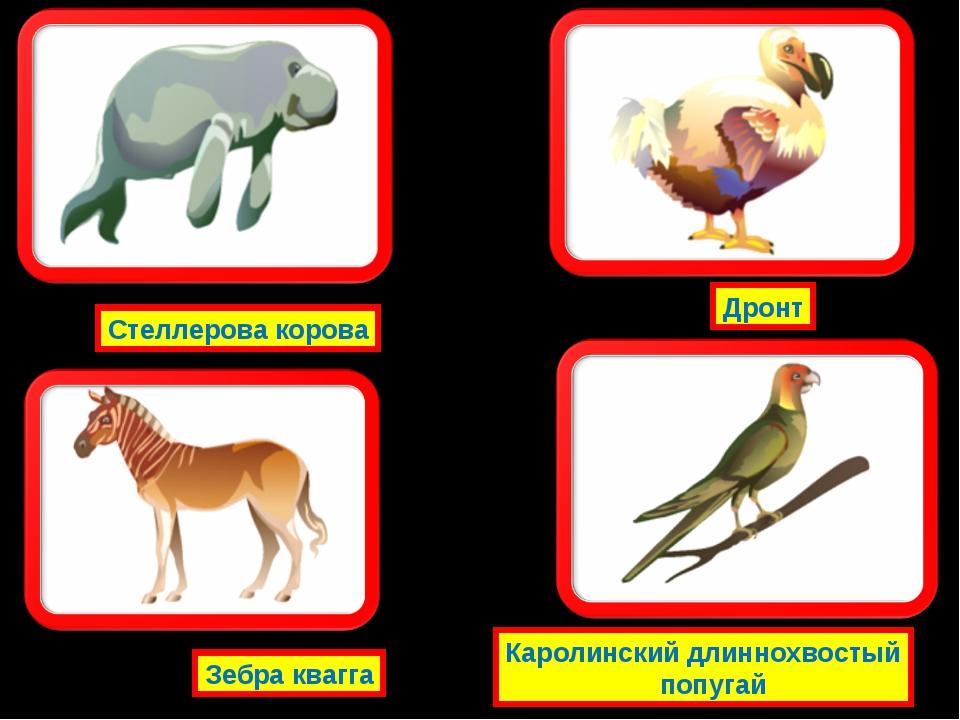Стеллерова корова Зебра квагга Дронт Каролинский длиннохвостый попугай