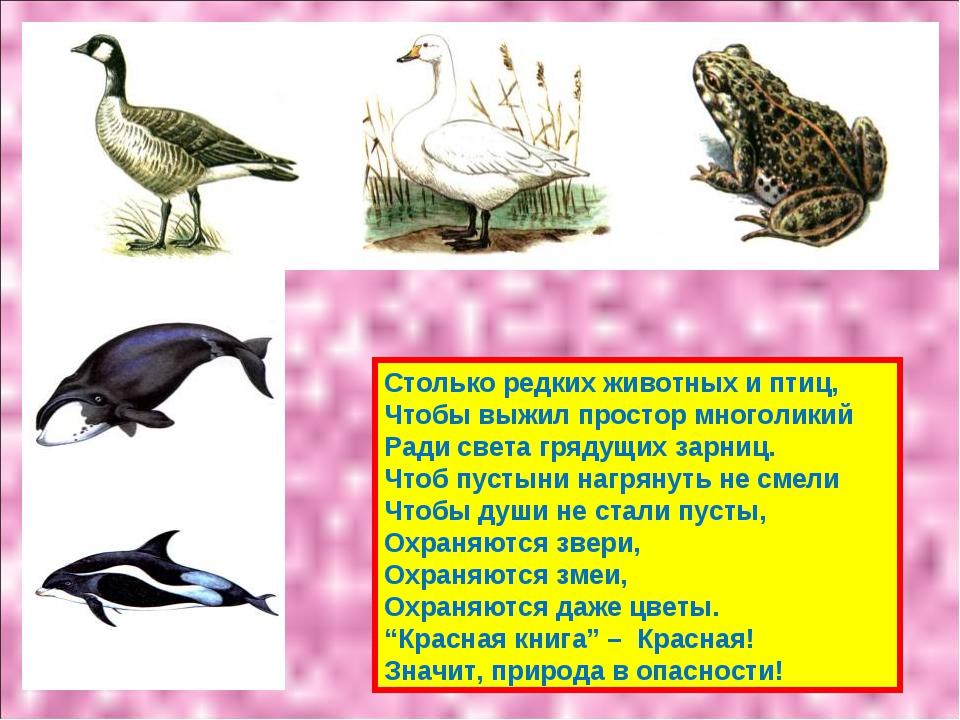 Столько редких животных и птиц, Чтобы выжил простор многоликий Ради света гря...