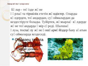 Бауыр аяқты ұлулар класы Бұлар - теңізде және құрлықтатіршілікететінжәнді