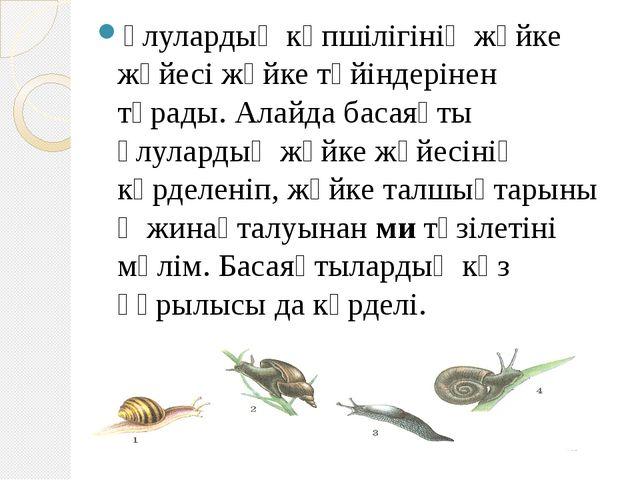 Ұлулардың көпшілігініңжүйке жүйесіжүйке түйіндерінен тұрады. Алайда басаяқт...