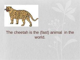The cheetah is the (fast) animal in the world.