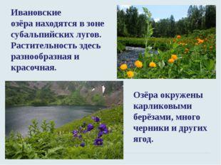 Ивановские озёранаходятся в зоне субальпийских лугов. Растительность здесь р