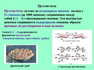 Целлюлоза Целлюлоза состоит из полимерных цепочек молекул D-глюкозы (до 1000