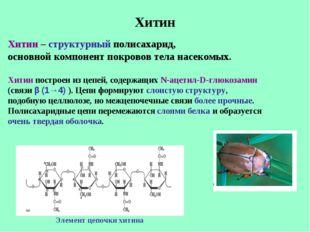 Хитин Хитин – структурный полисахарид, основной компонент покровов тела насек