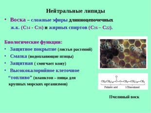 Нейтральные липиды Воска – сложные эфиры длинноцепочечных ж.к. (С14 - С36) и