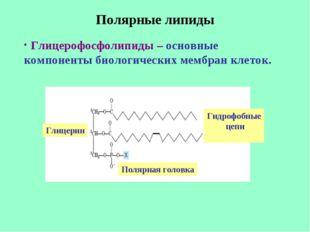 Полярные липиды Глицерофосфолипиды – основные компоненты биологических мембра