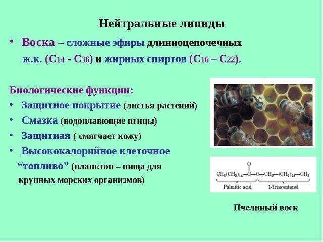 Нейтральные липиды Воска – сложные эфиры длинноцепочечных ж.к. (С14 - С36) и...
