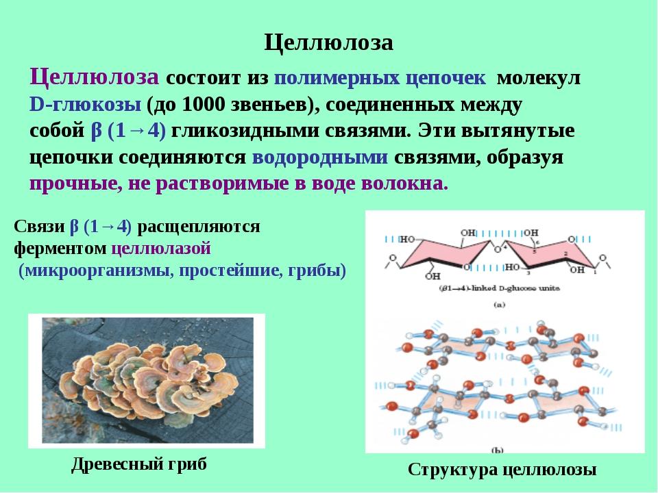 Целлюлоза Целлюлоза состоит из полимерных цепочек молекул D-глюкозы (до 1000...
