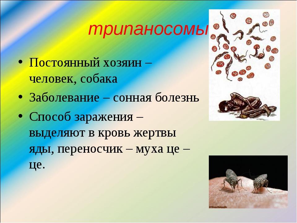 трипаносомы Постоянный хозяин – человек, собака Заболевание – сонная болезнь...