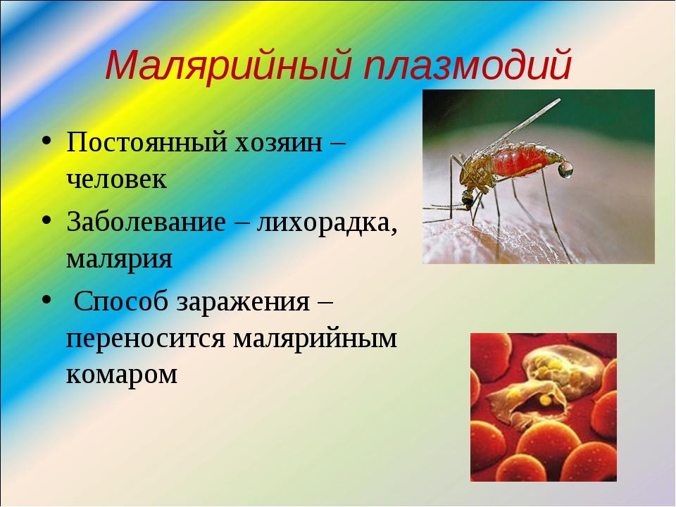 Малярийный плазмодий Постоянный хозяин – человек Заболевание – лихорадка, мал...