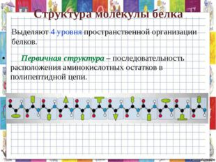 Структура молекулы белка Первичная структура – последовательность расположен