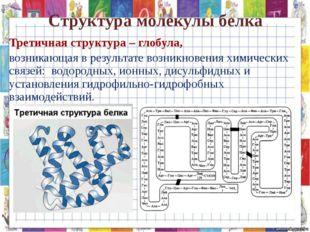 Структура молекулы белка Третичная структура – глобула, возникающая в результ