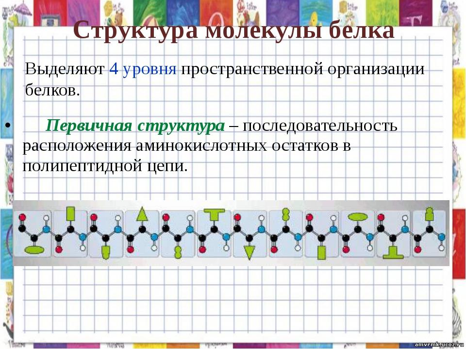 Структура молекулы белка Первичная структура – последовательность расположен...