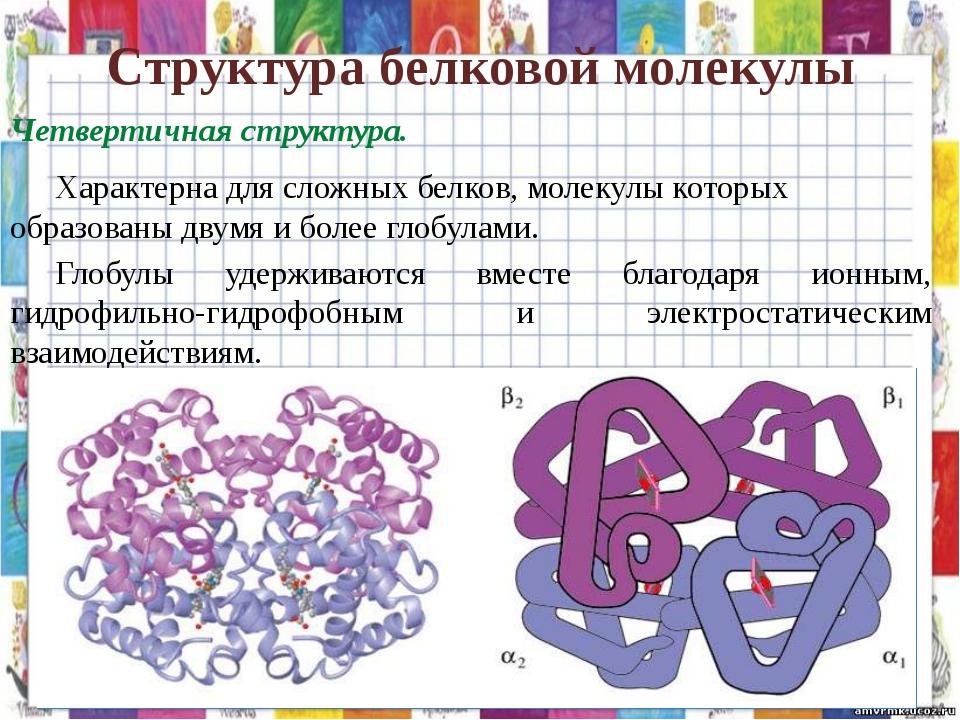 Структура белковой молекулы Четвертичная структура. Характерна для сложных б...
