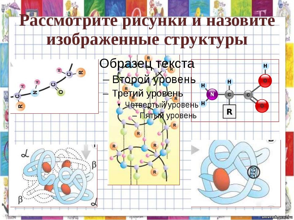 Рассмотрите рисунки и назовите изображенные структуры