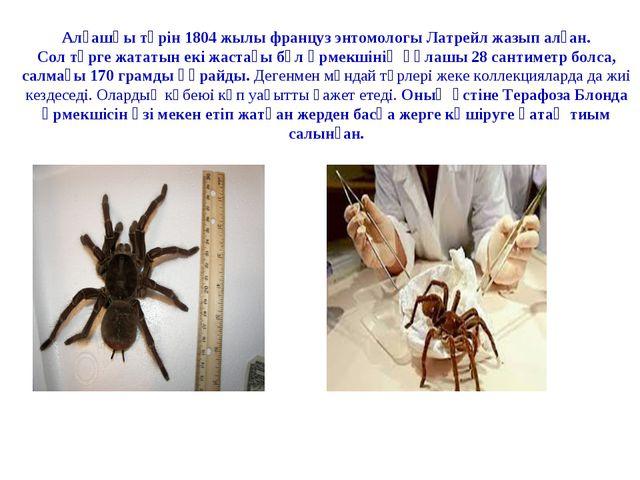 Алғашқы түрін 1804 жылы француз энтомологы Латрейл жазып алған. Сол түрге жа...