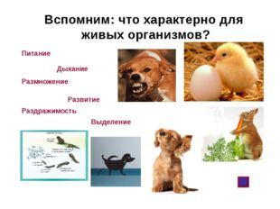 Вспомним: что характерно для живых организмов? Питание Дыхание Размножение Ра