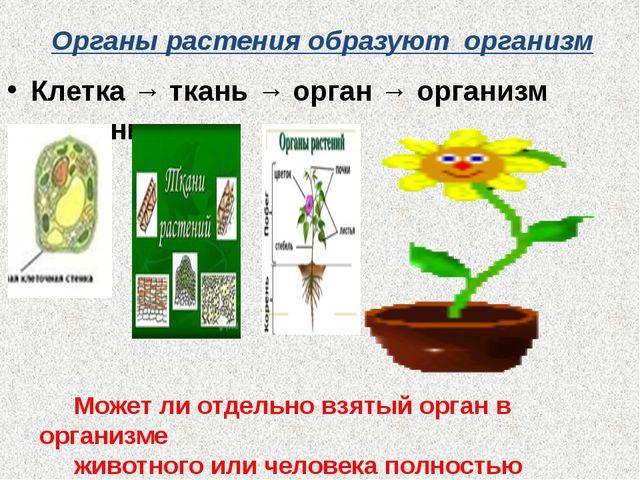 Органы растения образуют организм Клетка → ткань → орган → организм растения...