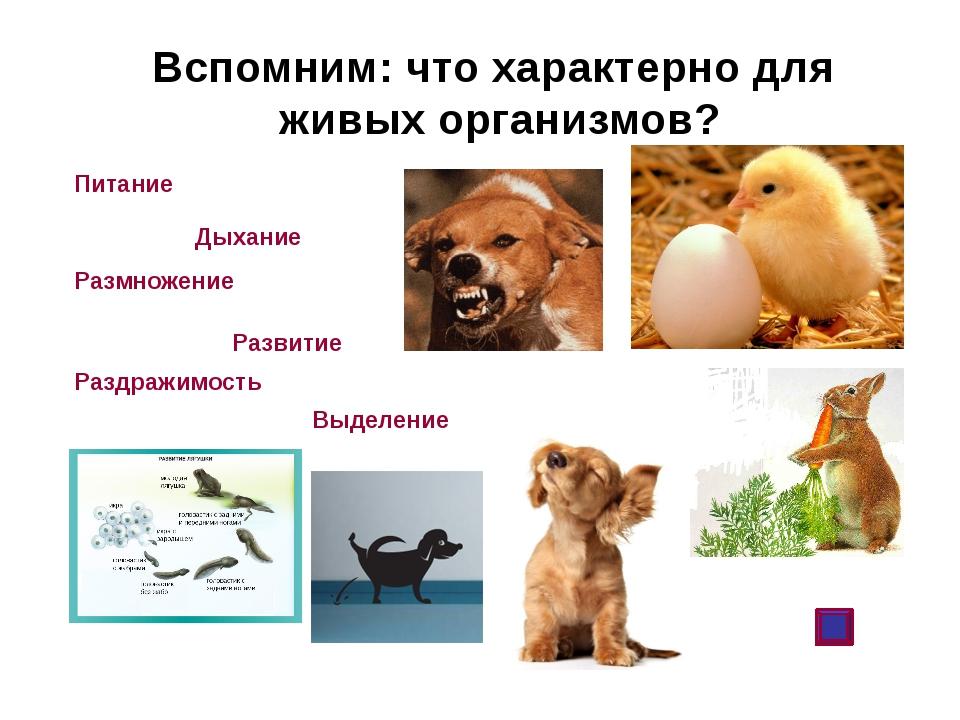 Вспомним: что характерно для живых организмов? Питание Дыхание Размножение Ра...