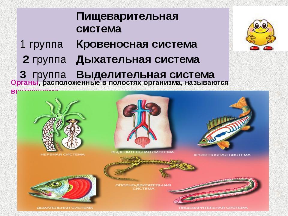Органы, расположенные в полостях организма, называются внутренними Пищеварите...