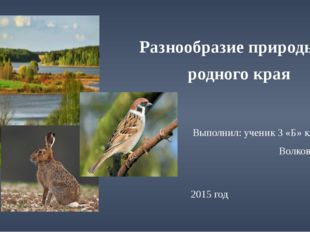 Разнообразие природы родного края Выполнил: ученик 3 «Б» класса Волков Иван