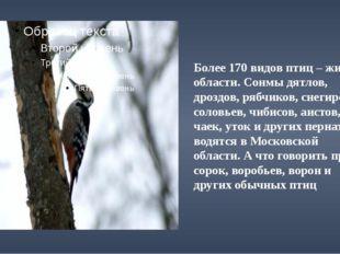 Более 170 видов птиц – жители области. Сонмы дятлов, дроздов, рябчиков, снег
