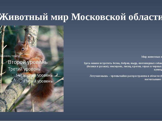 Животный мир Московской области Мир животных области богат. Здесь можно встре...