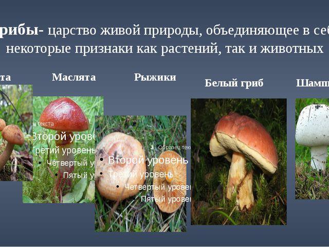 Грибы- царство живой природы, объединяющее в себе некоторые признаки как раст...