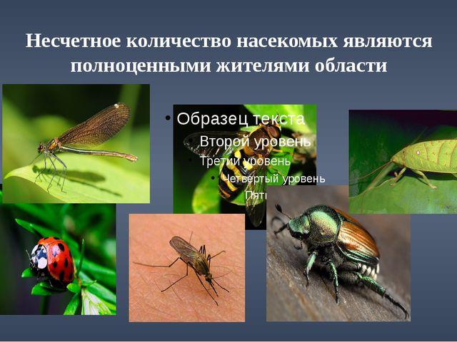 Несчетное количество насекомых являются полноценными жителями области