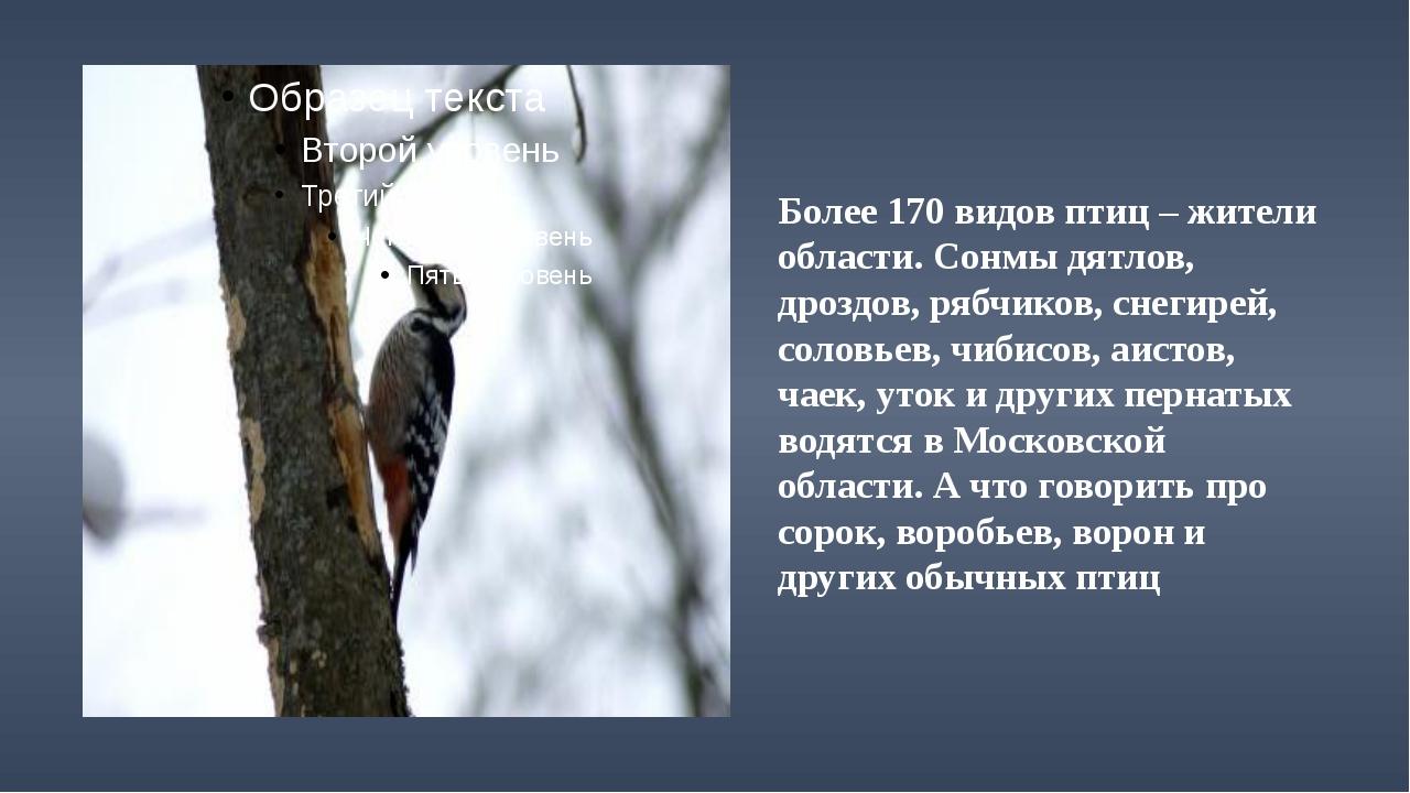 Более 170 видов птиц – жители области. Сонмы дятлов, дроздов, рябчиков, снег...
