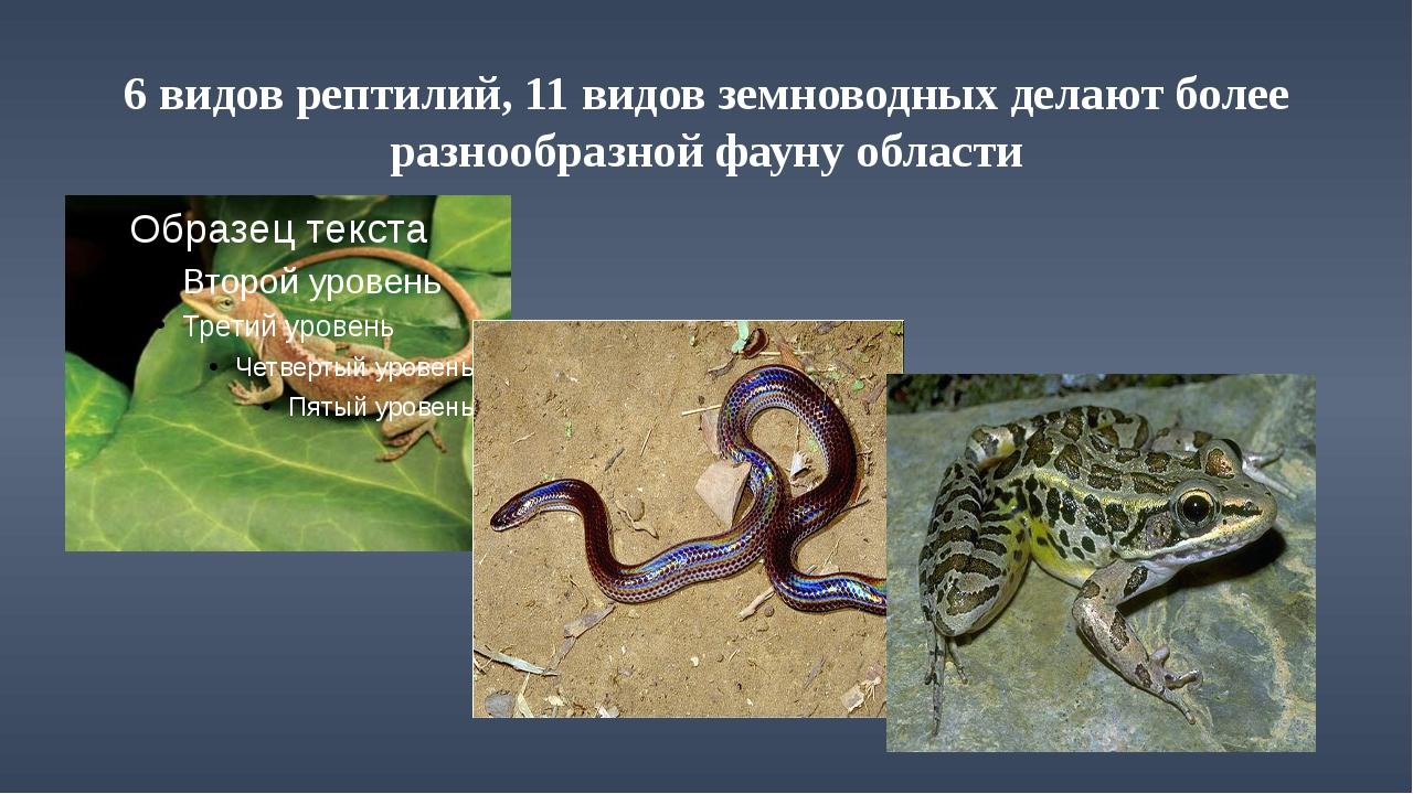 6 видов рептилий, 11 видов земноводных делают более разнообразной фауну области