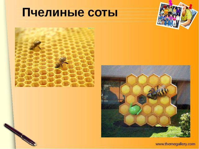 В животном мире www.themegallery.com