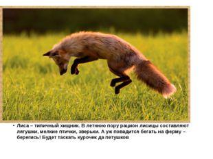 Лиса – типичный хищник. В летнюю пору рацион лисицы составляют лягушки, мелк
