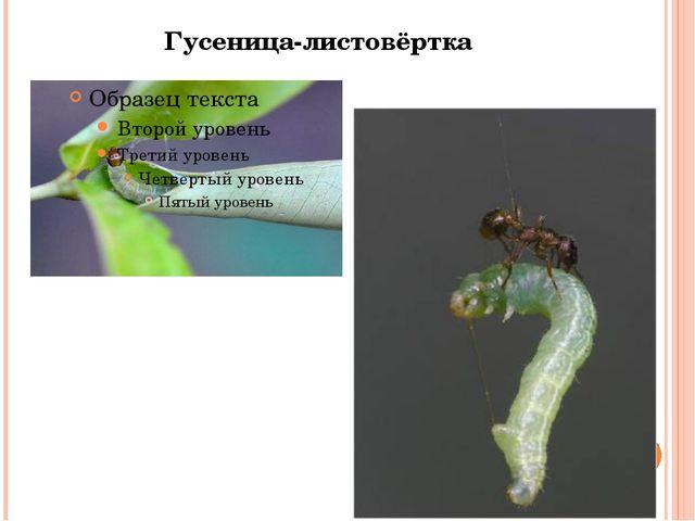 Гусеница-листовёртка