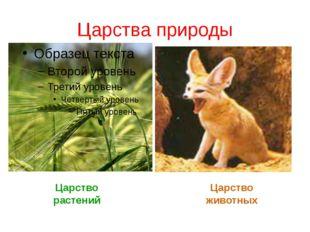 Царства природы Царство растений Царство животных