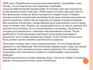 1958 году в Поднебесной началась массовая борьба с воробьями. А все потому, ч