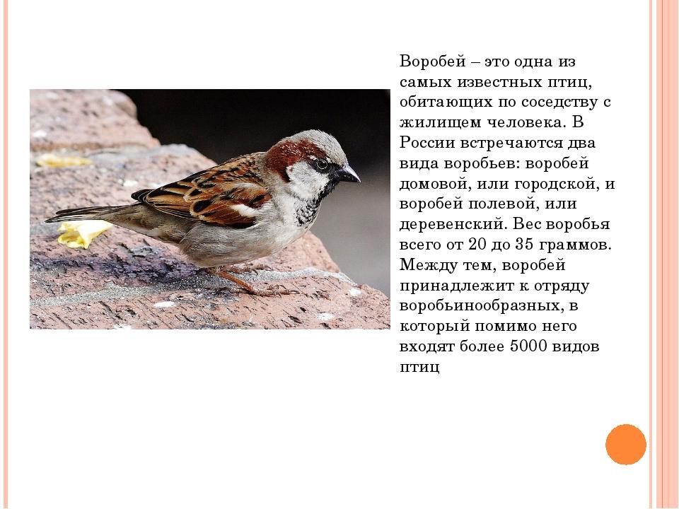 Воробей – это одна из самых известных птиц, обитающих по соседству с жилищем...