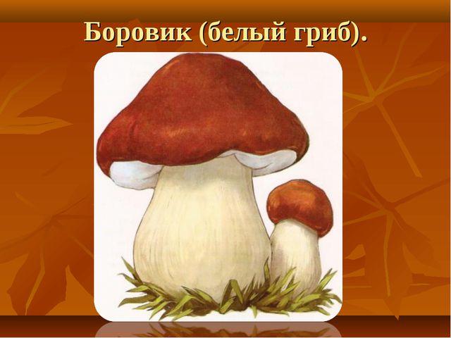 Боровик (белый гриб).