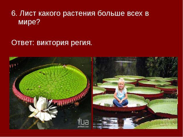 6. Лист какого растения больше всех в мире? Ответ: виктория регия.