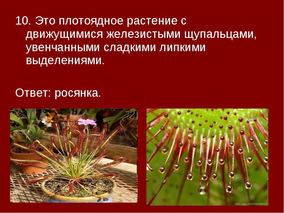 10. Это плотоядное растение с движущимися железистыми щупальцами, увенчанными...