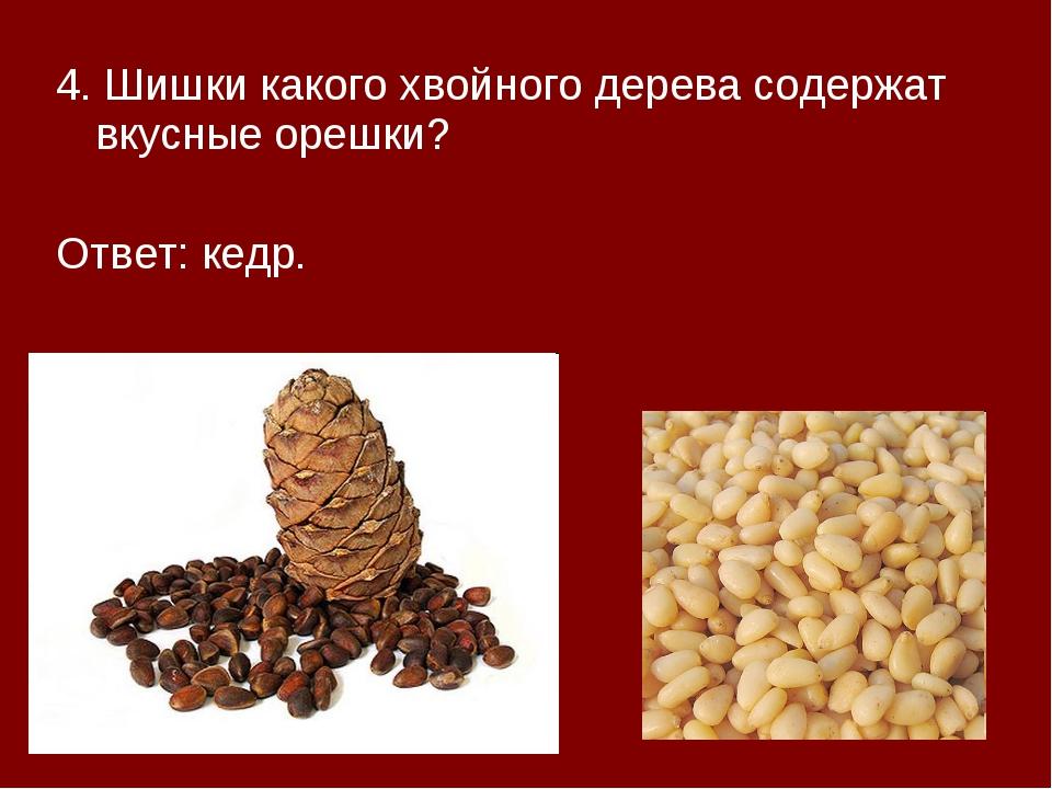 4. Шишки какого хвойного дерева содержат вкусные орешки? Ответ: кедр.
