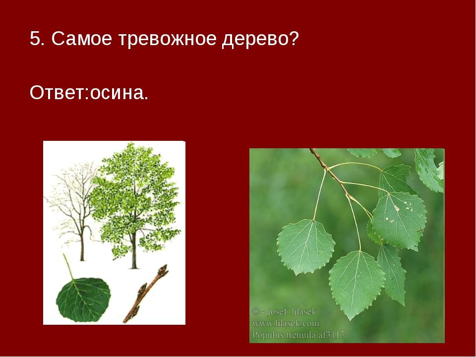 5. Самое тревожное дерево? Ответ:осина.