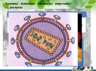 Адамның иммундық тапшылық вирусының құрылысы Title in here Title in here