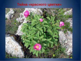 Тайна «красного цветка»
