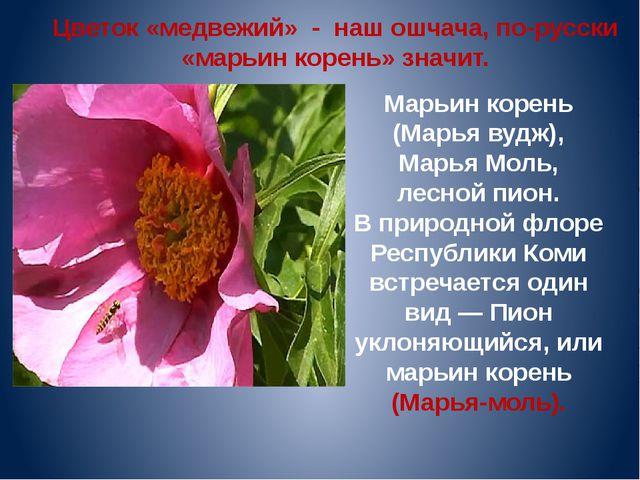 Цветок «медвежий» - наш ошчача, по-русски «марьин корень» значит. Марьин коре...
