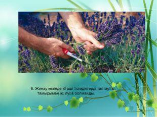 6. Жинау кезінде көрші өсімдіктерді таптауға, тамырымен жұлуға болмайды.