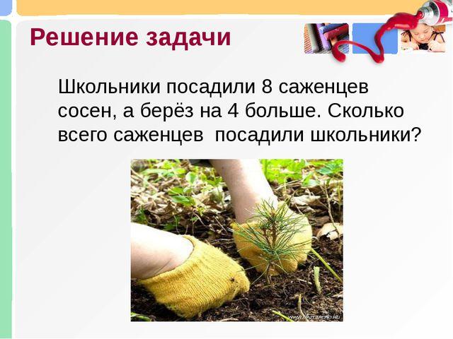 Решение задачи Школьники посадили 8 саженцев сосен, а берёз на 4 больше. Скол...