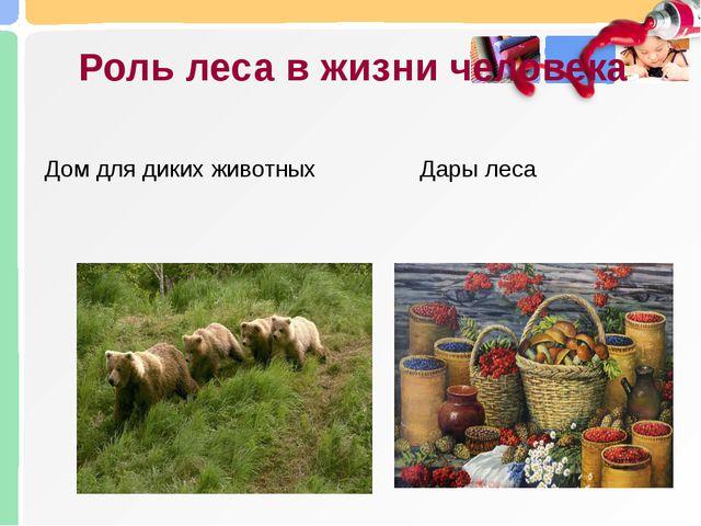 Роль леса в жизни человека Дары леса Дом для диких животных